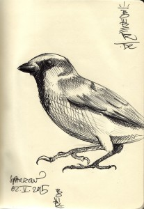 sparrow/spatz/sperling, ballpen on paper, 2015