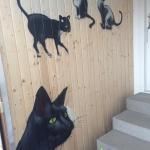 Katzen_Kayser-Kriftel