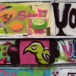 vogel_bird